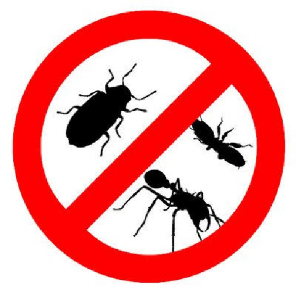 Gold coast pest and termite control