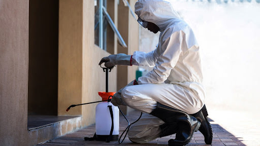 The Average Cost of Pest Control Service