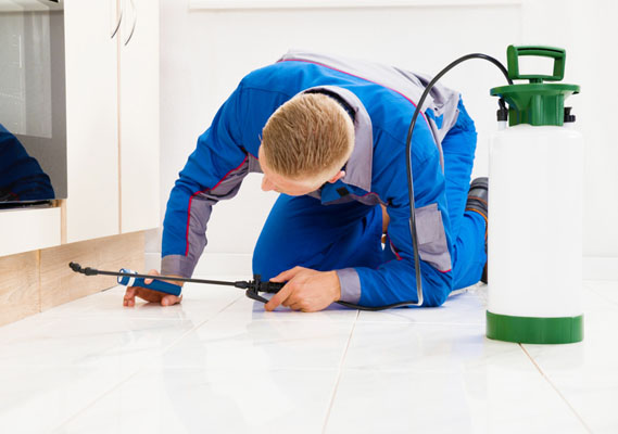 Why You Need Pest Control Services This Spring
