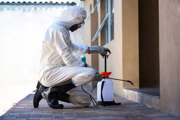 Find Expert Pest Control Services in Wollongong