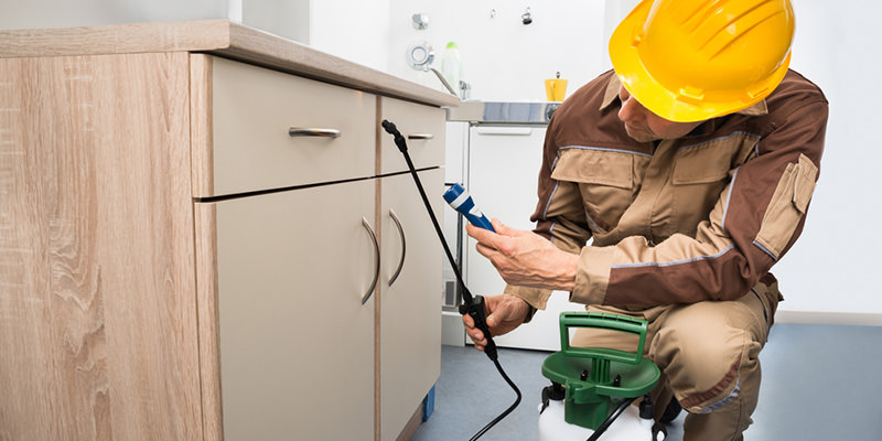 What does pest control do to treat pest infestation?