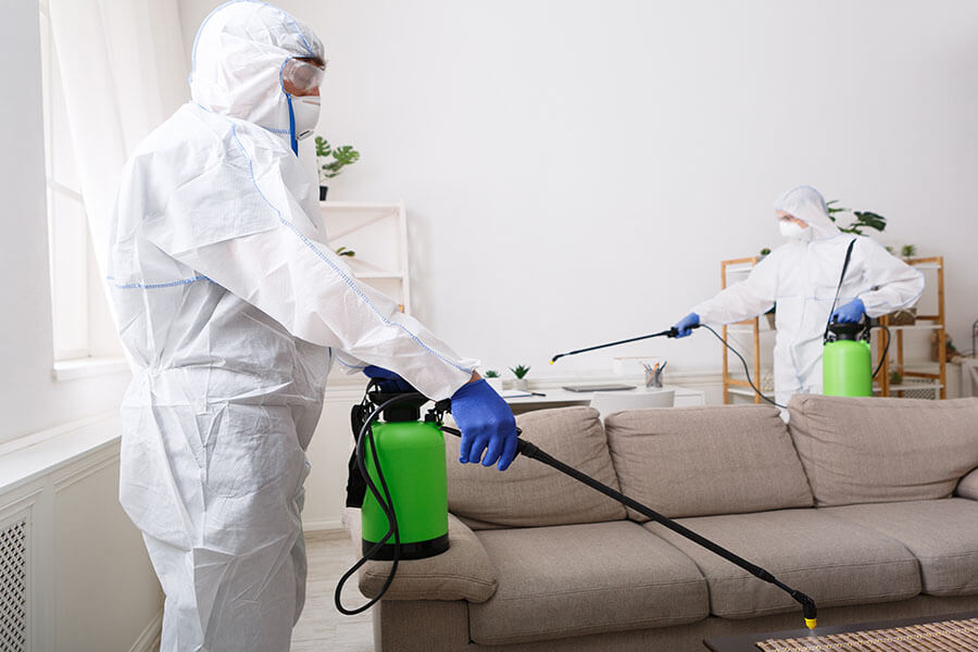 Pest Control Services in North Sydney NSW