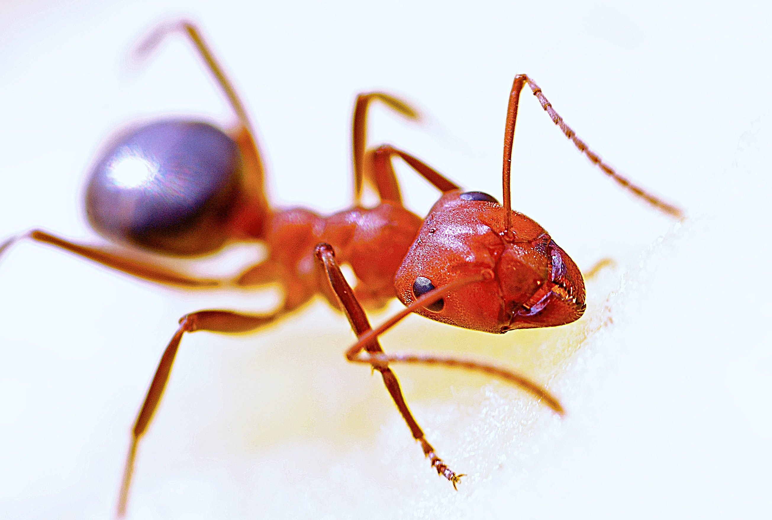Top 10 Pest Control Experts in Brisbane, QLD