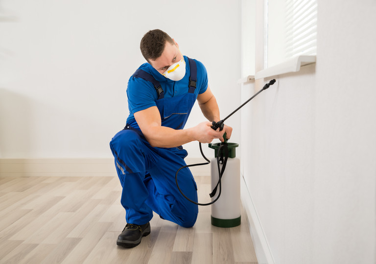 10 Best Pest Control Services in Brisbane